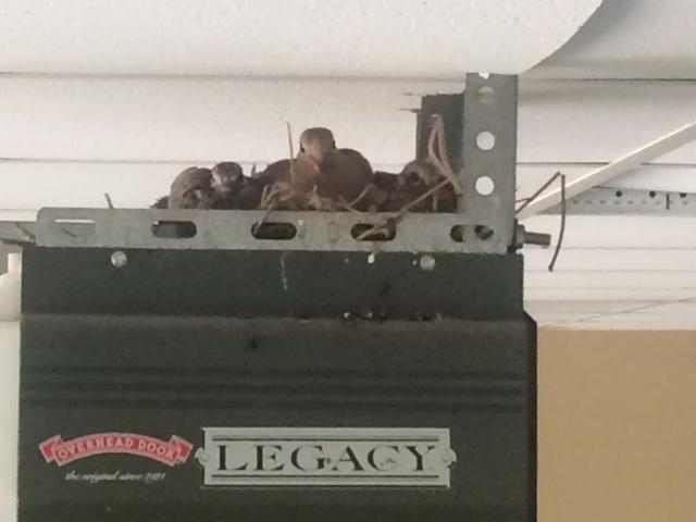 Family of Doves on top of Legacy Garage Door Opener